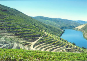 Quinta_do_Pego_landscape1_WEB