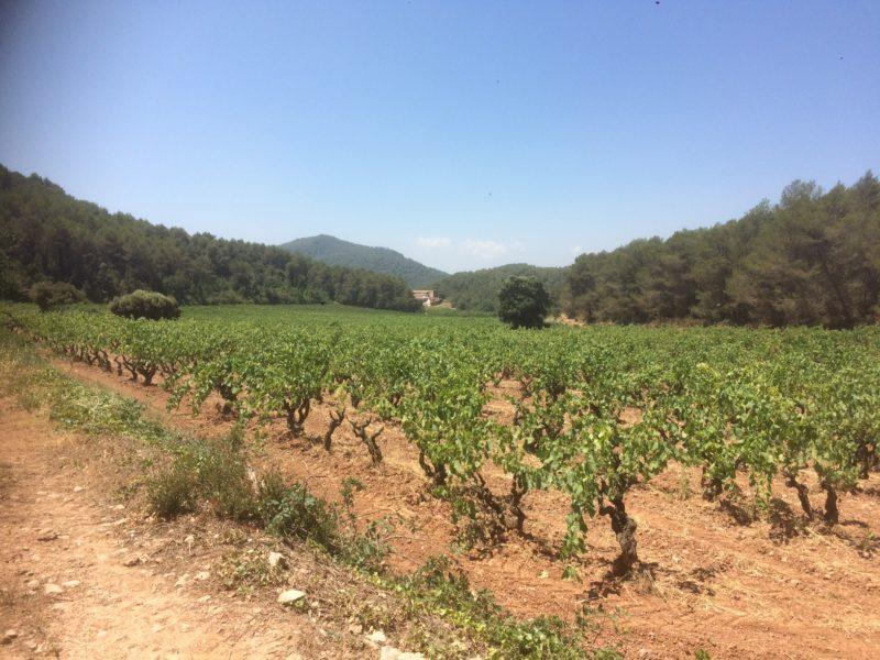 Bli bedre kjent med den biodynamiske vinprodusenten Loxarel!