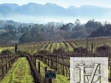 Elgin Vintners lager flotte viner fra Sør-Afrika
